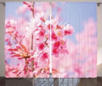Sakura Blossom Branches Curtain
