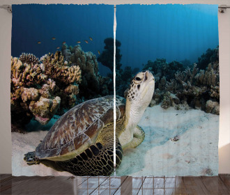 Turtle Coral Reef Curtain
