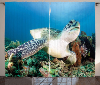 Green Turtle Coral Curtain
