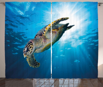 Sea Turtle Diving Curtain