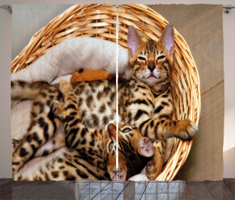 Bengal Cats in Basket Curtain