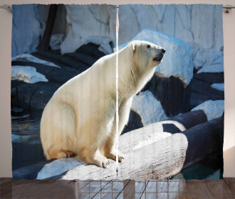 Polar Bear in Park Rocks Curtain