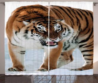 Siberian Predator Feline Curtain