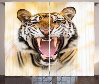 Young Panthera Growling Curtain