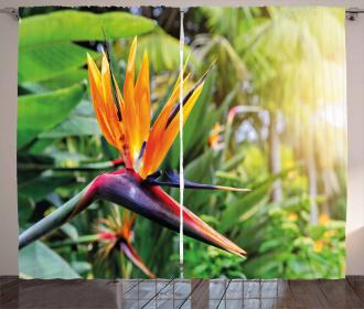 Bird of Paradise Flower Curtain