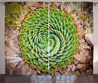 Aloe Polyphylla Vera Curtain