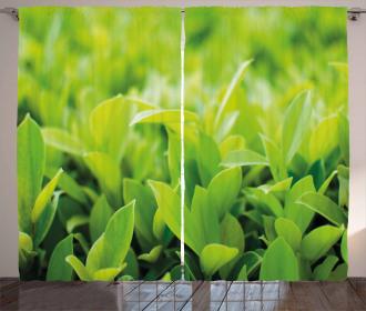 Lush Green Leaves Curtain
