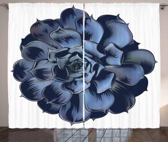 Echeveria Cactus Blossom Curtain