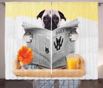 Pug Reading News Daily Dog Curtain
