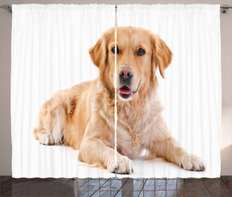 Young Puppy Curtain