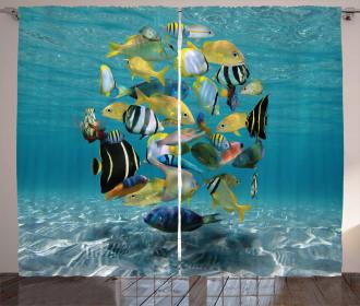 Shoal of Fish Underwater Curtain