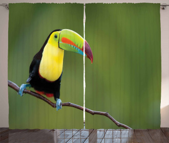 Keel Billed Toucan Curtain