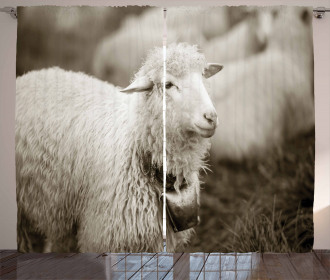 Fluffy Wooly Sheep Herd Curtain