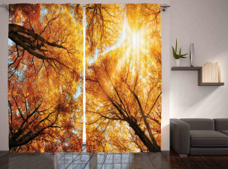 Autumn Sunbeams Forest Curtain