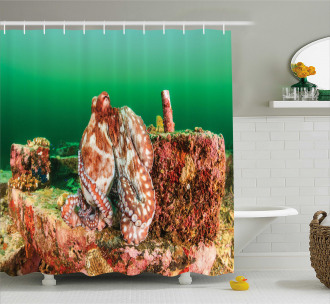 Octopus in Water Shower Curtain