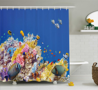 Tropical Corals Fish Shower Curtain