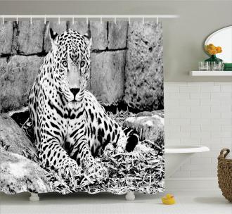 Wild Tiger Jaguar Shower Curtain