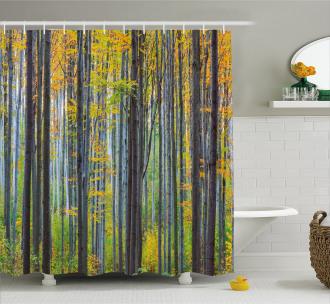 Autumn Season Beech Forest Shower Curtain