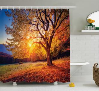 Autumn Fall Tree Leaves Shower Curtain