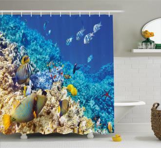 Aquatic Corals Shower Curtain