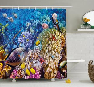 Ocean Beauties Shower Curtain