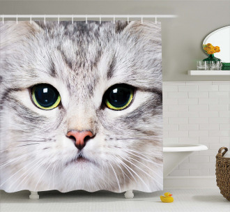 Face of a Domestic Kitty Shower Curtain