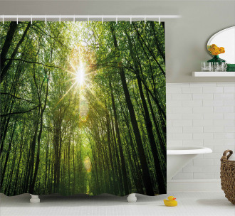 Summer Trees Upward View Shower Curtain