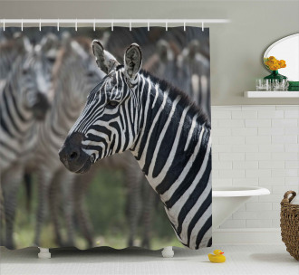 Zebra in Serengati Park Shower Curtain