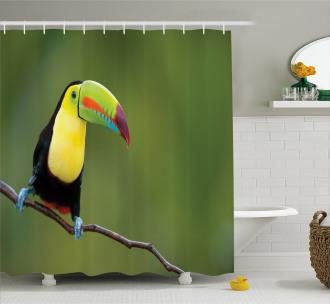 Keel Billed Toucan Shower Curtain
