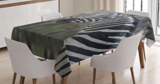 Zebra in Serengati Park Tablecloth