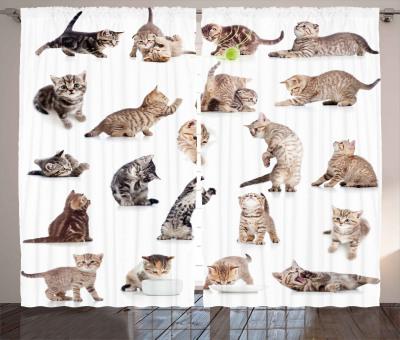 Lustige Spielerische Katzen Bild Katze Baumwolle Teppich