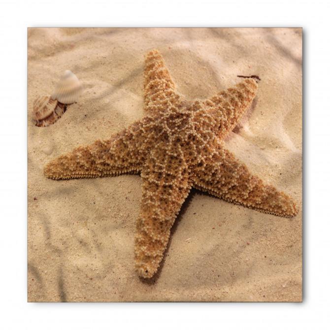 Kumdaki Denizyıldızı Bandana Fular