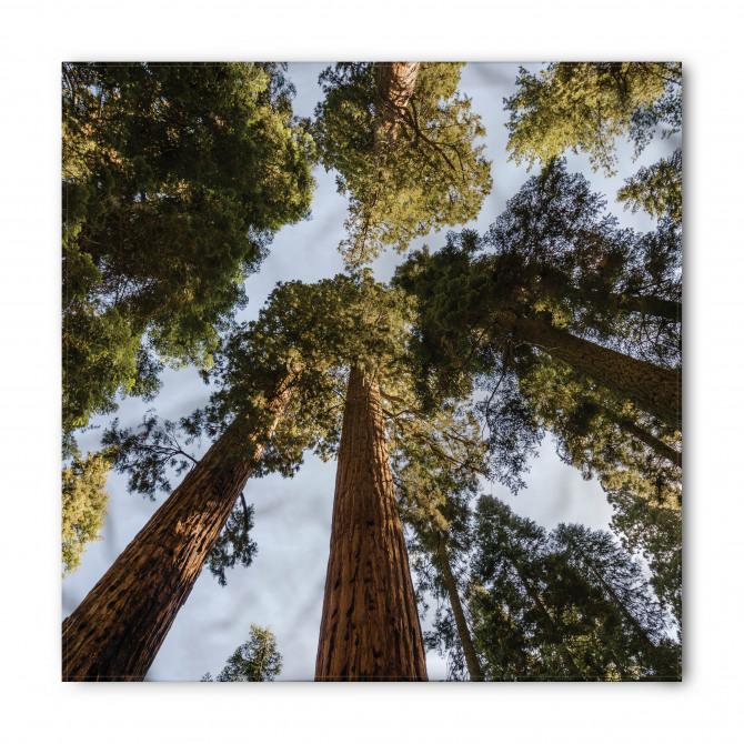 Ağaçlar ve Gökyüzü Bandana Fular