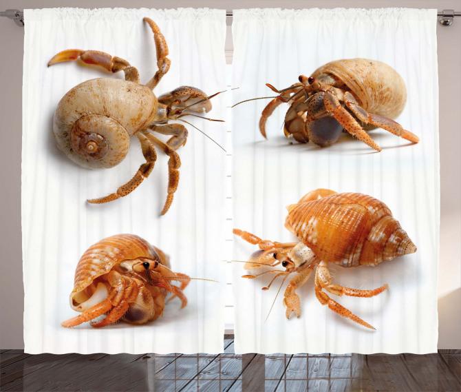 Hermit Crabs Pattern Curtain