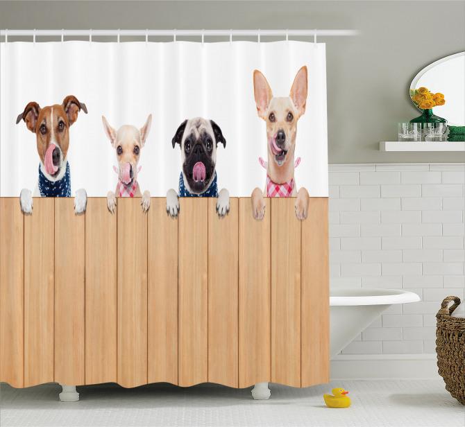 Hayvan Severlere Duş Perdesi Köpekler Yemek Vakti