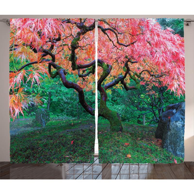 Red Leaf Maple in Garden Curtain