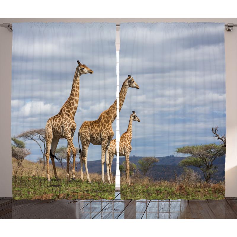 Giraffe Family Curtain