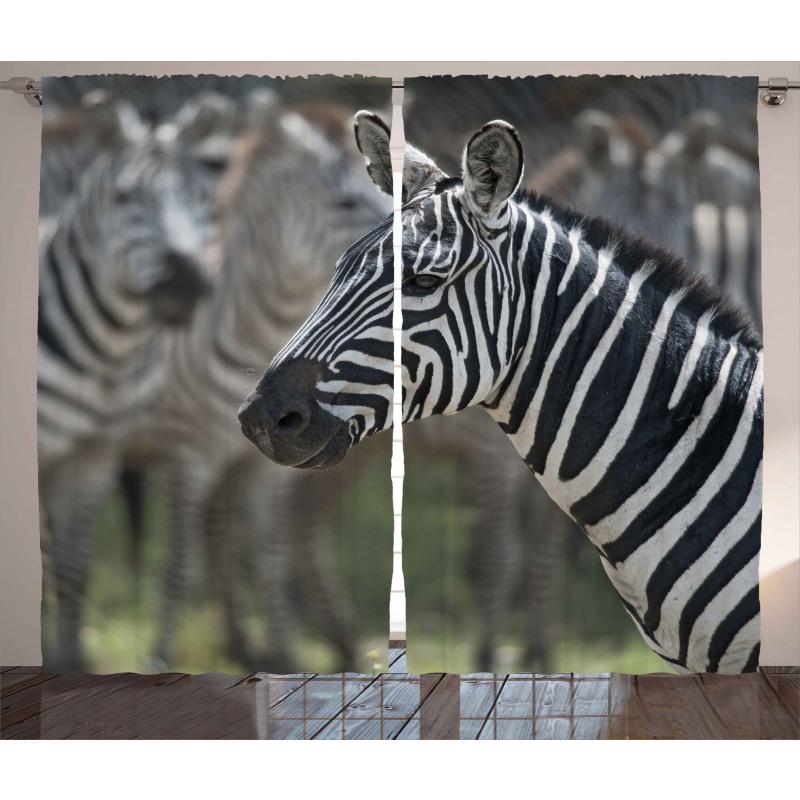 Zebra in Serengati Park Curtain