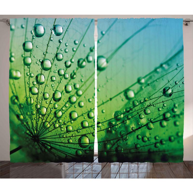 Photo of Dandelion Seeds Curtain