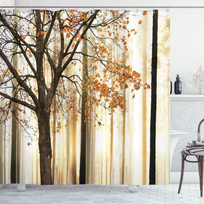 Ağaçlar Duş Perdesi Sararmış Yapraklı Ağaç Gövdeleri