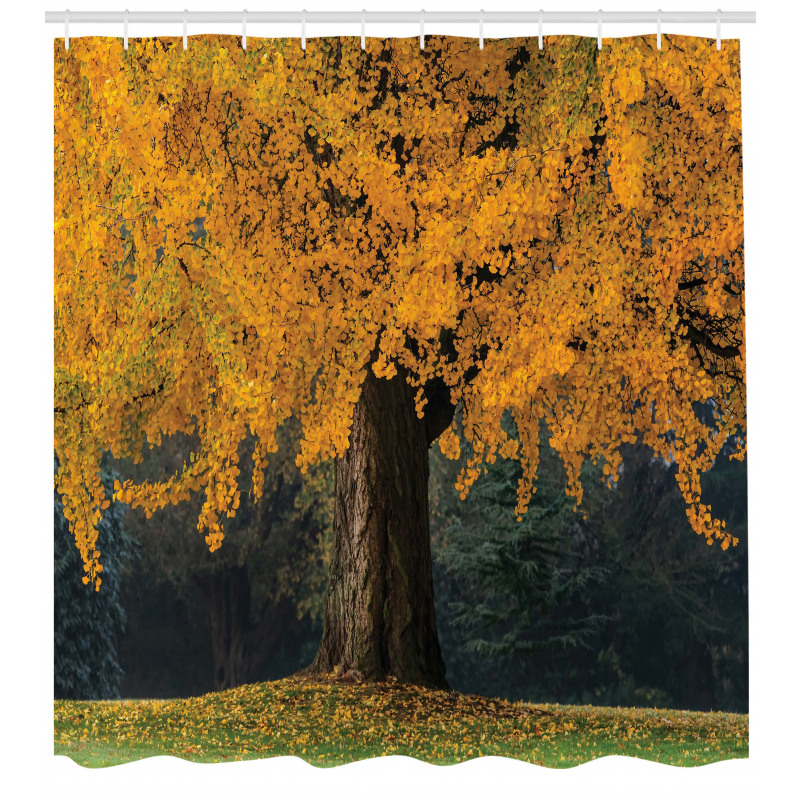 Ağaçlar Duş Perdesi Sararmış Yapraklı Ağaç